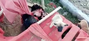 (Özel Haber) Sokak köpekleri ölüme terk edildi