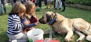 Karşıyaka'da köpek ırkları yarışacak