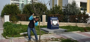 Yunusemre'de 1 milyon fidan toprakla buluşuyor