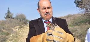 Mersin'de tedavi edilen hayvanlar doğaya salındı