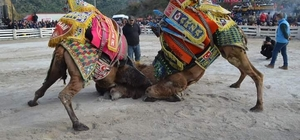 Germencik'te 70 yıllık gelenek binlerce kişinin katılımı ile devam etti