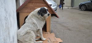 "Sokak köpeği ""Karagöz'e"" esnaftan sıcak yuva"