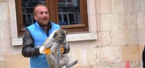 Bayburt'ta sokak hayvanları tedavi için toplanıyor