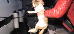 Köpekten kaçarken denize düşen kediyi vatandaşlar kurtardı