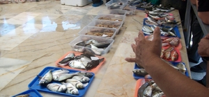 Urla'da deniz yüzde 95 temizlendi