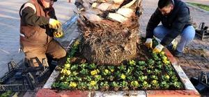 Marmaraereğlisi caddelerinde çiçek açacak