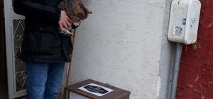 Sokak kedileri için duyarlı davranış