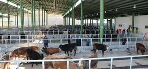 İzmit Belediyesi'nin modern hayvan pazarına yoğun ilgi