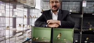 Avukat Çetin'in Kanaryaları dünya birincisi