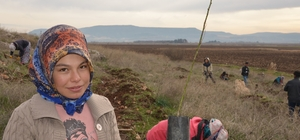 Yanan ağaçlandırma sahasına 18 bin badem fidanı dikildi