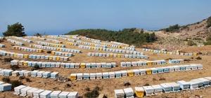Aydın'a 2 milyon 582 bin lira arı desteği