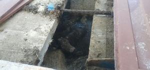 Atık çukuruna düşen inek 3 saatte kurtarıldı