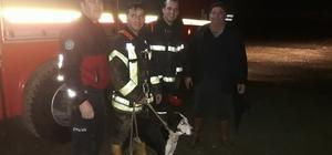 Uçuruma yuvarlanan av köpeğini itfaiye kurtardı