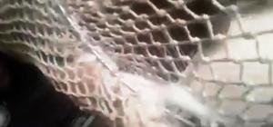 Havalandırma boşluğuna düşen kediyi itfaiye kurtardı