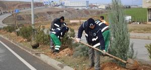 Siirt Belediyesi ağaçlandırma çalışmaları devam ediyor