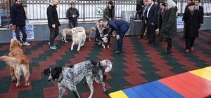 Beyoğlu'nda hayvanlar için pati park açıldı