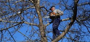 Siirt'te ağaç budama çalışmaları başladı