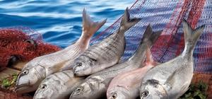 alıkçılık sektörü 1 milyar dolar ihracata koşuyor