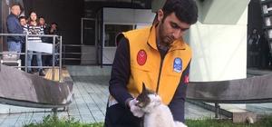 Yürüyen merdivene sıkışan kediyi veteriner ekipleri kurtardı