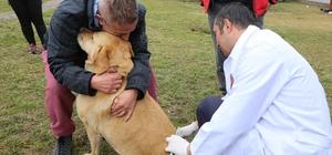 Sokak hayvanlarının rutin aşı takvimi uygulamaya devam ediyor