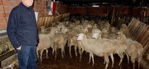 '300 koyun' için başvuruları başladı