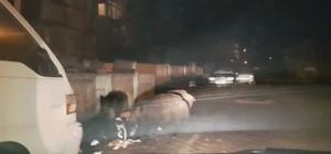 Marmaris'te domuz sürüsü şehre indi