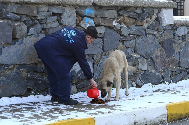 Sokak hayvanları için yem bırakıldı