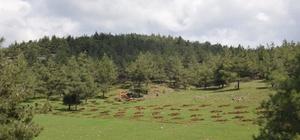 Kilis'te ormanlık alanlar arttırılıyor