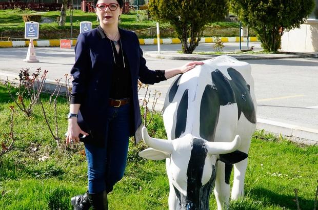 Köylünün 'sağım kalitesindeki sütü halka ulaştırma' hayali gerçek oldu
