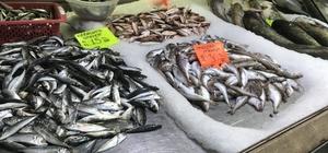 Tezgahlara yayın balığı 25 TL'den satılıyor