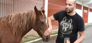 Taşkında mahsur kalan at, açlıktan poşet yemiş