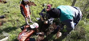 Öğrenciler 150 Sığla Fidanını Toprakla Buluşturdu