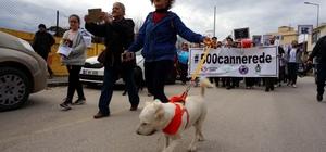 Edirne'de sokak köpeklerinin kaybolduğu iddiası