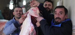 Baraj gölünde yayın balığı bereketi