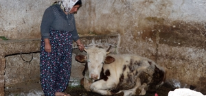 Gaziantep'te 20 günde onlarca hayvan telef oldu