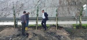 Başkan Duymuş, ağaçlandırma çalışmalarını inceledi