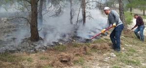 Aydın'daki yangında 1 dönümlük ormanlık alan kül oldu