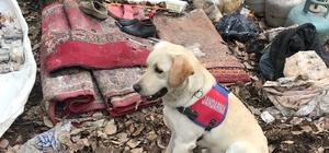 Bitlis'te PKK'ya ait 3 sığınak bulundu