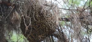"""Antalya'da """"arı"""" operasyonu"""