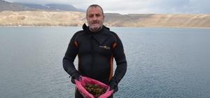 Aygır Gölü, zebra midye tehlikesi ile karşı karşıya