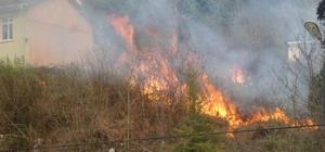 Sinop'ta 1 dönümlük alan yandı