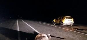 Otomobilin çarptığı at, telef oldu