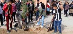 Silopili öğrenciler, 'Zeytin Dalı Harekatı' şehitleri için fidan dikti