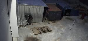 Talaş hırsızlığı kamerada