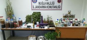 Jandarmadan uyuşturucu operasyonu: 1 tutuklama