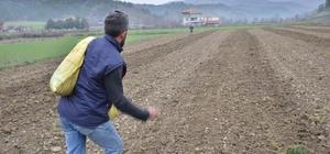 Hanönü'de yıllar sonra kendir ekimine başlandı