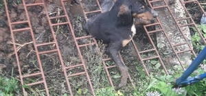 Demir mazgalın altında kalan köpek için itfaiye seferber oldu