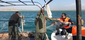 İnci kefali balığı, jandarma korumasında