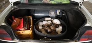Kapıkule'de otomobilin bagajından 15 yavru köpek çıktı