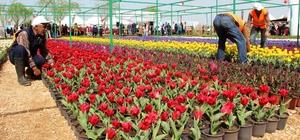 Kayapınar'da 2 milyon çiçek toprakla buluşturuyor